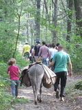 Découverte de la forêt avec 3 ânes