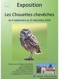 """Exposition: """"Les Chouettes Chevêches"""""""