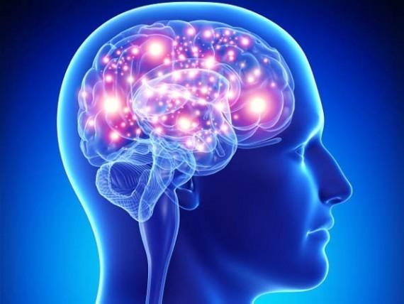 Esprit ? Cerveau ? Lorsque la psychologie cognitive interroge nos représentations...
