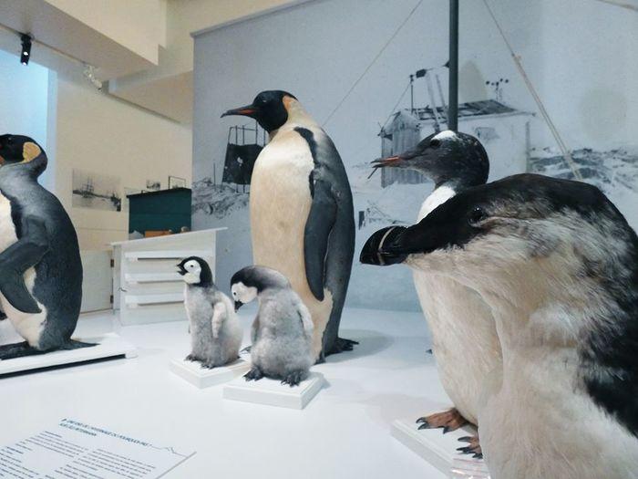 Journées du patrimoine 2020 - Visite libre du Muséum