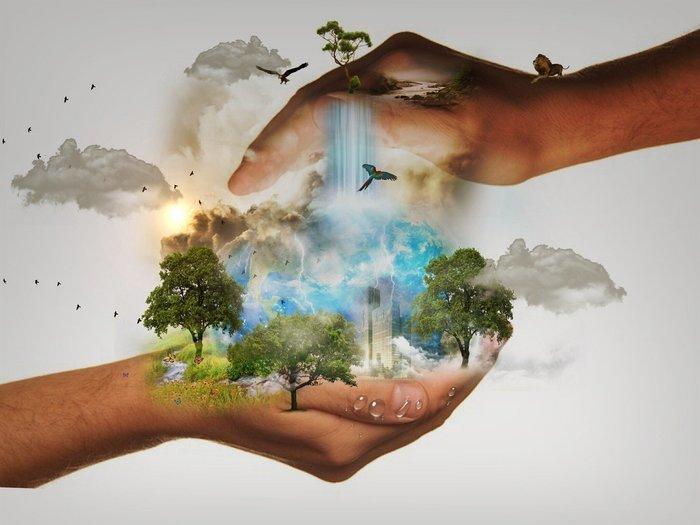 Au moyen d'éléments naturels et d'outils adaptés, vous mènerez l'enquête dans une réserve naturelle virtuelle.