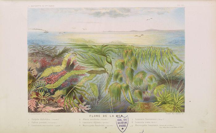 Journées du patrimoine 2019 - Algues, un jardin sous la mer