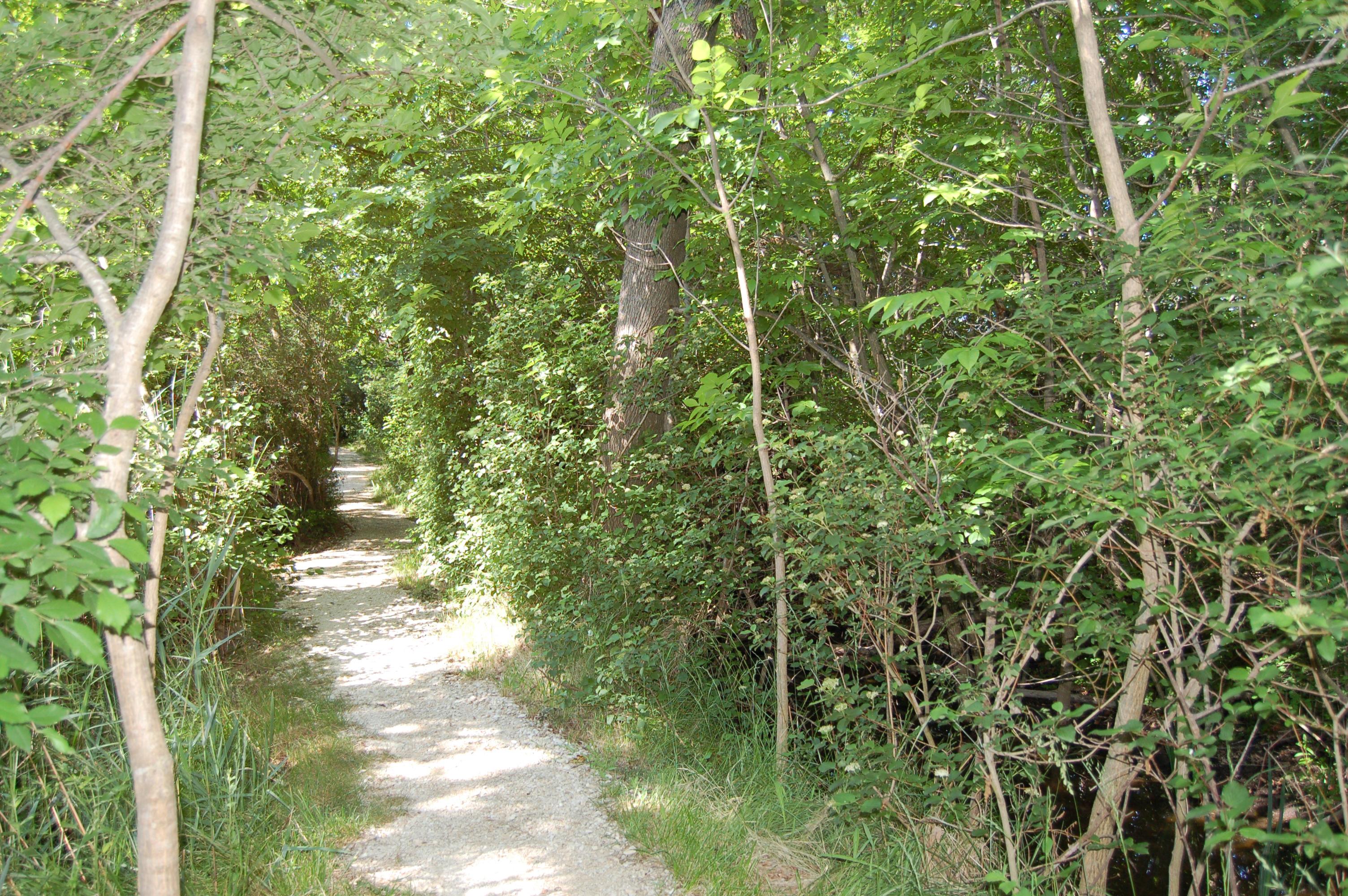 Découvrez La Capelière, centre d'information de la Réserve Naturelle Nationale de Camargue, et ses chemins de randonnée.