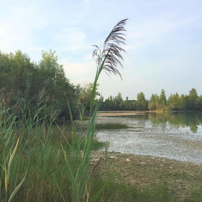 Journées du patrimoine 2019 - Circuit de découverte d'un site naturel préservé : l'écopôle de Desnes