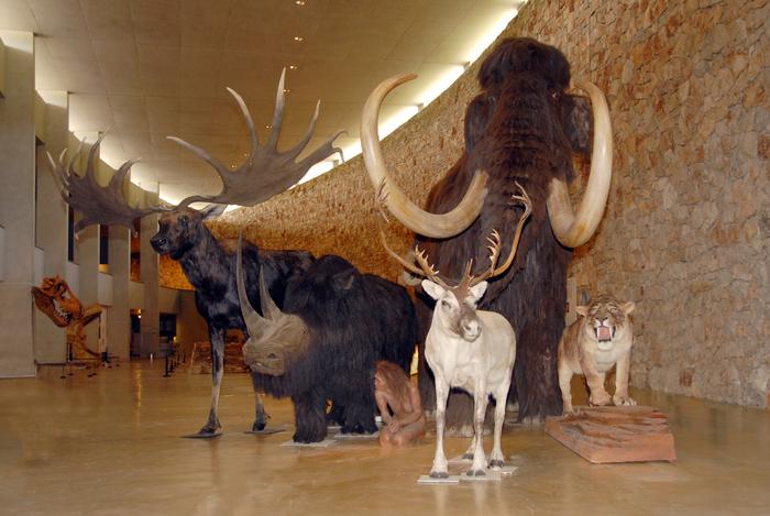 Journées du patrimoine 2019 - Entrée libre et gratuite au Musée de Préhistoire des gorges du Verdon