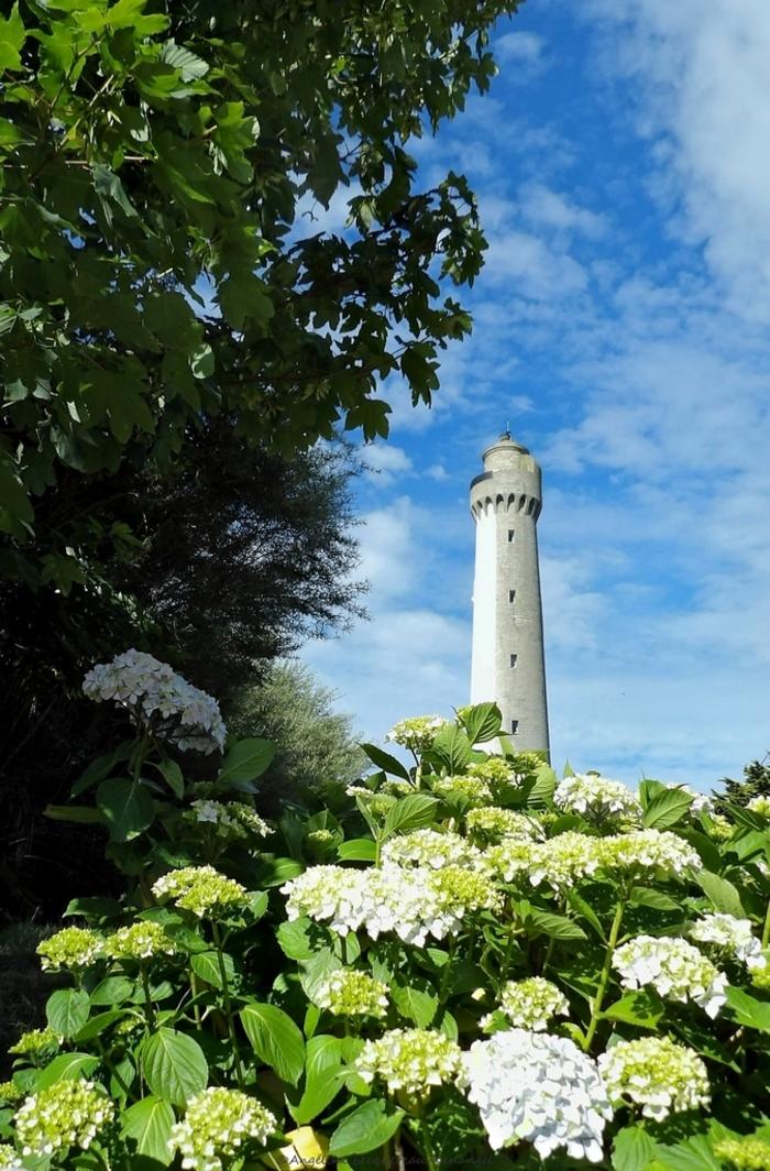 Journées du patrimoine 2020 - Prenez de la hauteur en Iroise / Visite guidée du phare Trézien