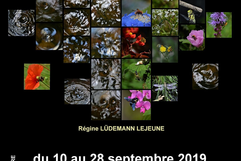 Exposition « Eau et Nature »