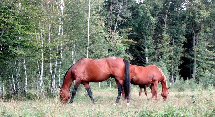Journées du patrimoine 2020 - Des chevaux en famille !