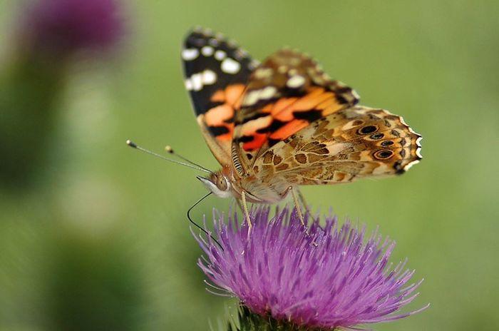 Balade naturaliste à la découverte du papillon