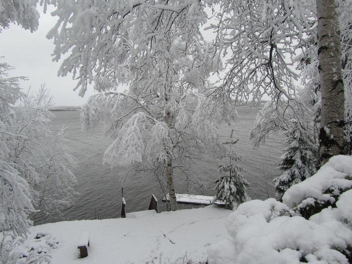Le petit arbre qui voulait de la neige