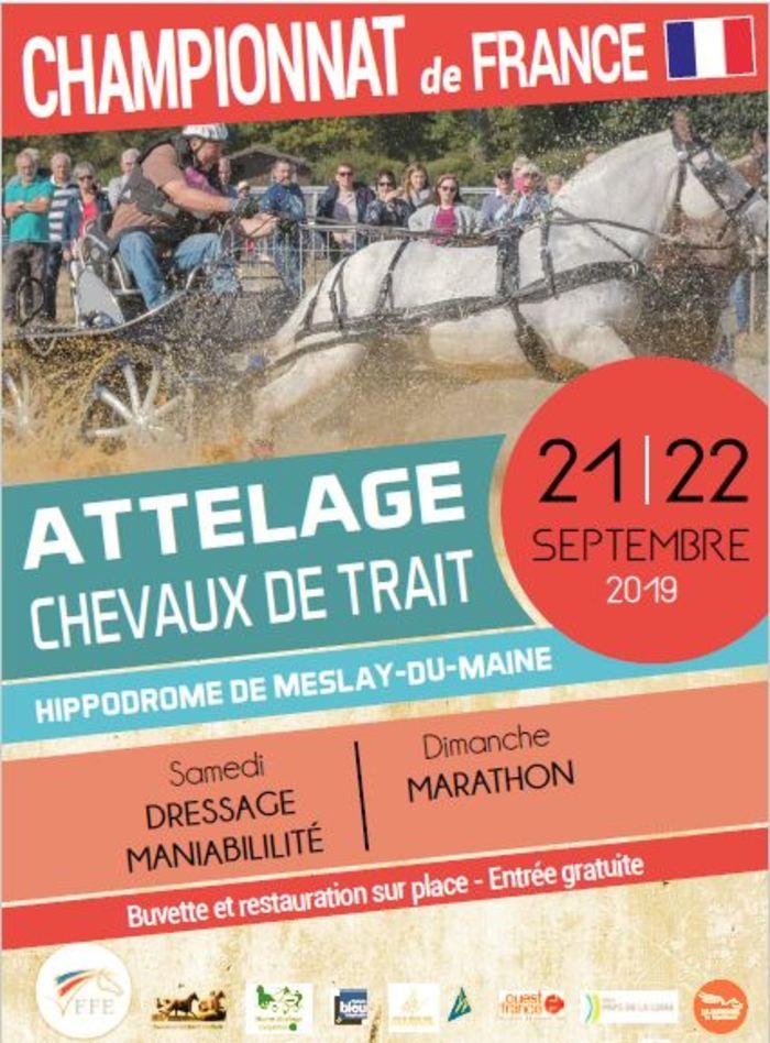Journées du patrimoine 2019 - Championnat de France d'attelage des chevaux de trait