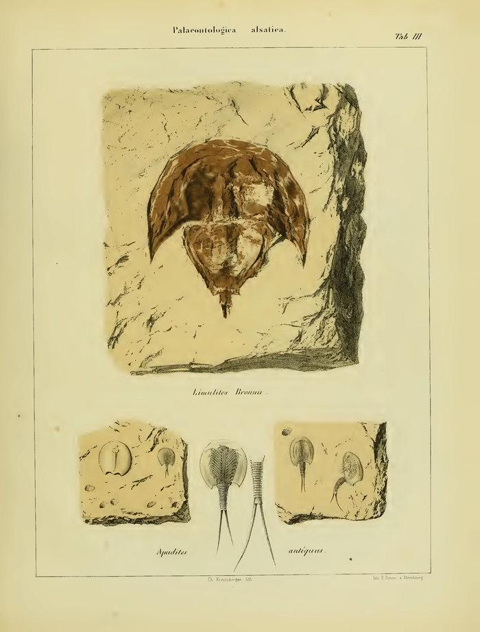Journées du patrimoine 2019 - Les collections de paléontologie du Musée d'histoire naturelle de Strasbourg (1818 - 1870)