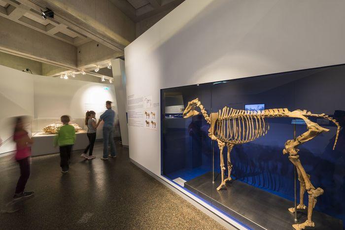 Journées du patrimoine 2020 - Découverte du musée de la préhistoire de Solutré