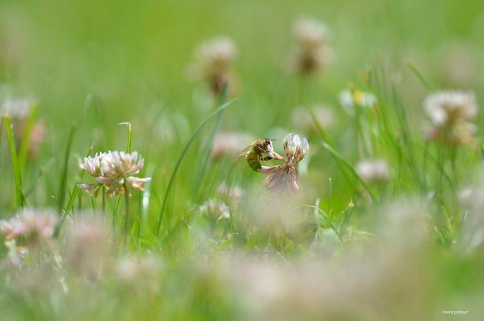 Les mouches aiment les fleurs