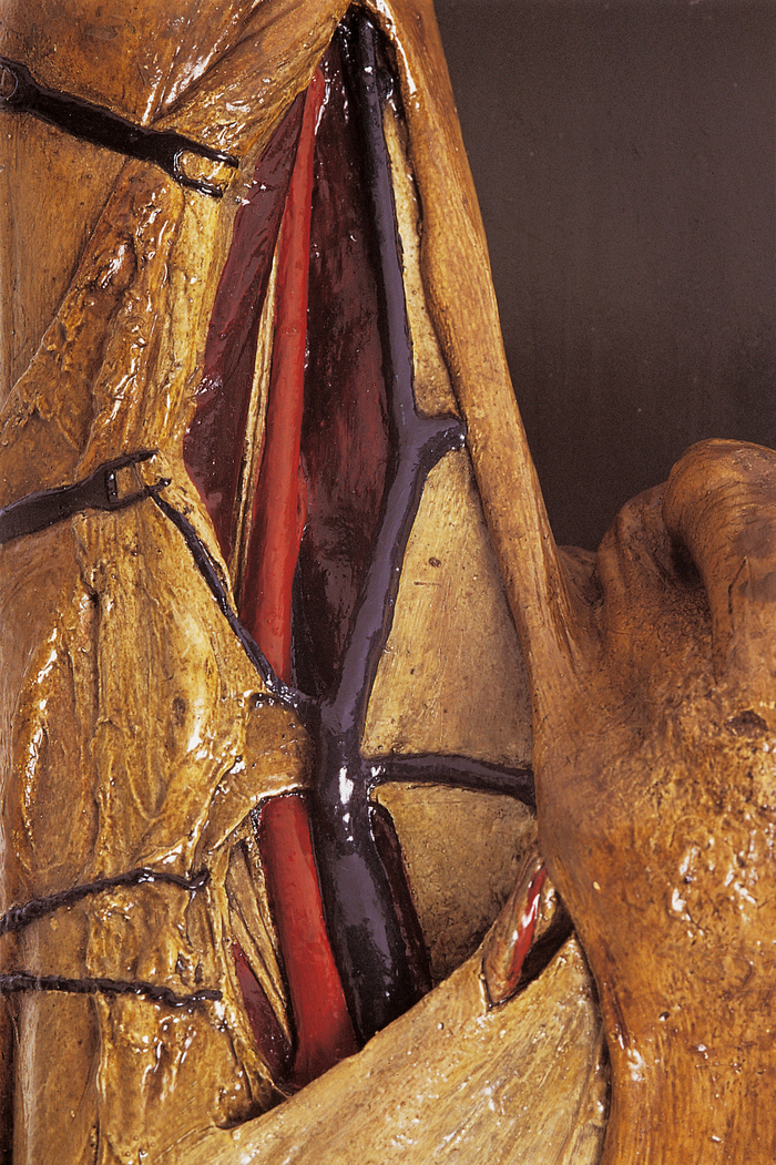 Journées du patrimoine 2020 - Visite de la collection d'anatomie