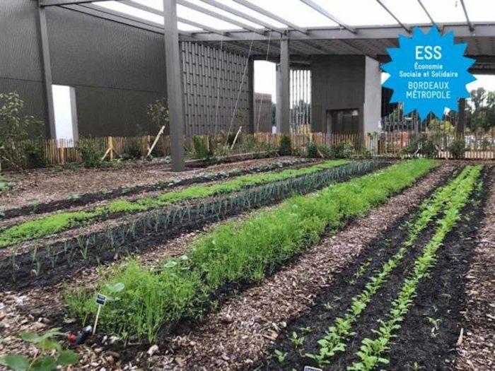 TOUR DE L'ESS 2020 – Visite «Un aménagement paysager et comestible à Bordeaux Lac» avec Akebia