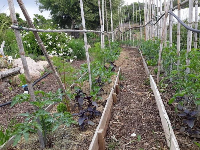 Journées du patrimoine 2020 - Rencontre Botanique à Sant'Amanza