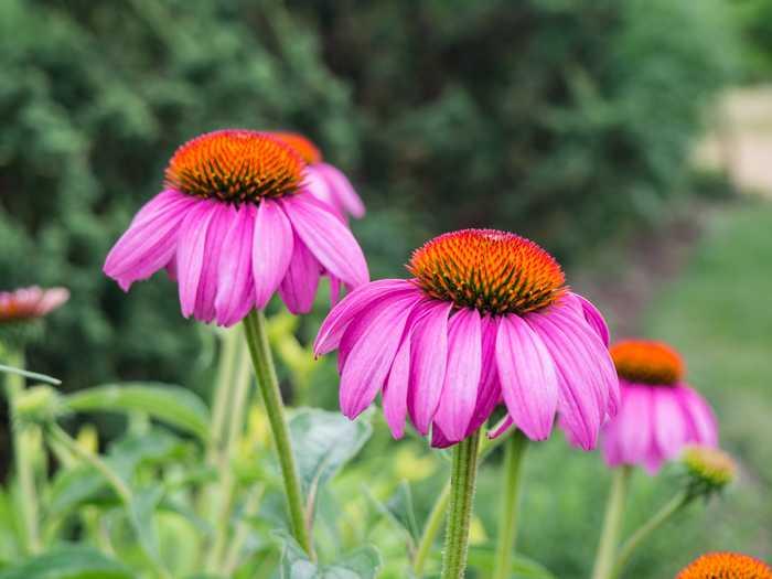 Journées du patrimoine 2019 - Jardin botanique