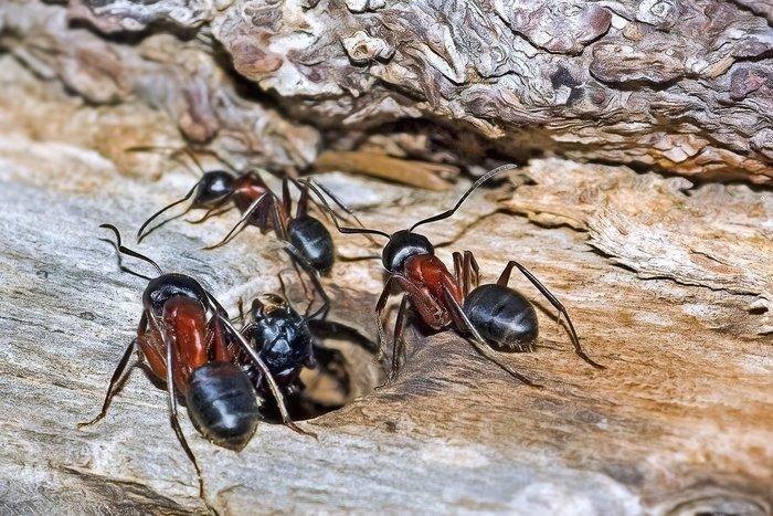 Découvrez la vie des insectes au fur et à mesure des saisons. Pourquoi sont-ils très présents en été ? Où se cachent-ils pendant l'hiver ?