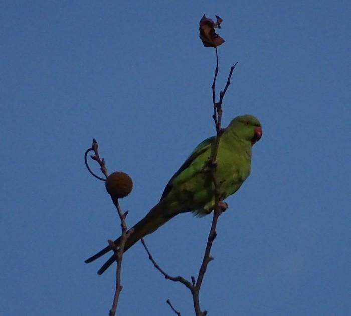 L'automne des oiseaux