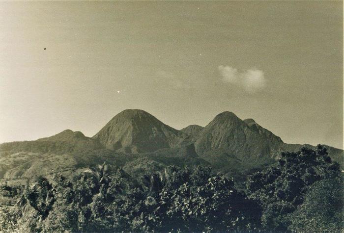 Journées du patrimoine 2020 - Morne-Rouge / Espèces végétales endémiques de la montagne Pelée et des pitons du Carbet