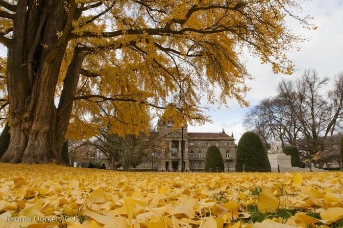 Journées du patrimoine 2020 - Visite guidée — À la découverte de la Neustadt