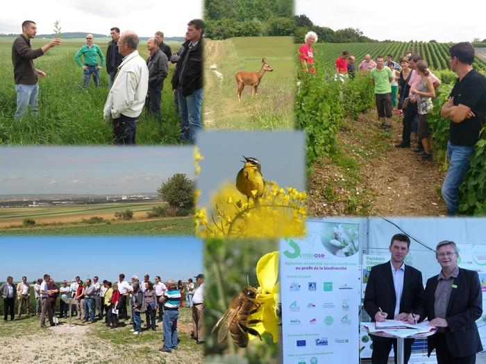 Journées du patrimoine 2019 - Balade découverte de la biodiversité en territoire agricole