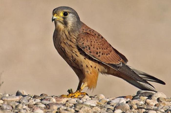 Journées du patrimoine 2020 - Découverte de la faune locale