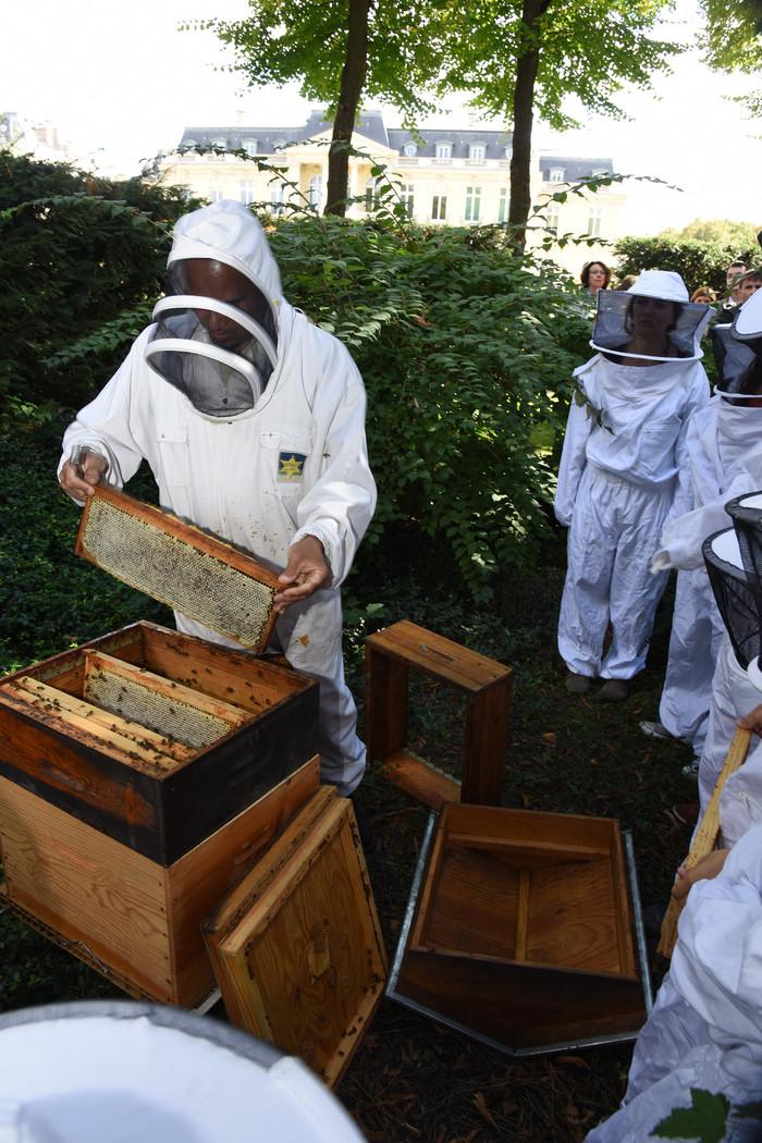 Journées du patrimoine 2019 - Découvrir l'apiculture urbaine. Atelier-rencontre avec l'apiculteur du château de la Muette