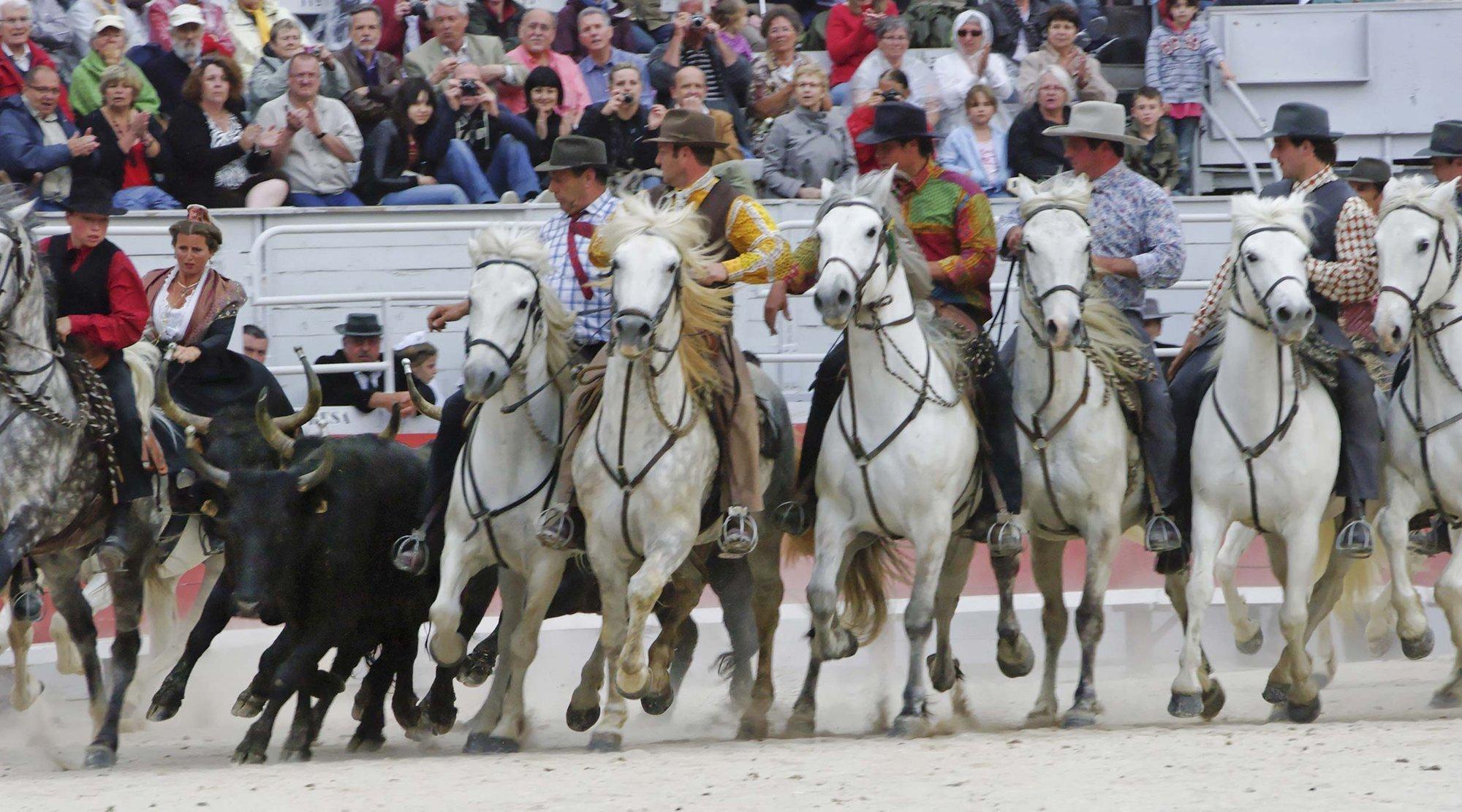 Gardians, taureaux et chevaux en vedette