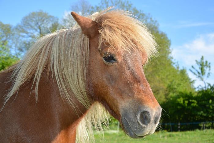 Journées du patrimoine 2020 - Balade à poney dans l'enceinte du Château de Ruat