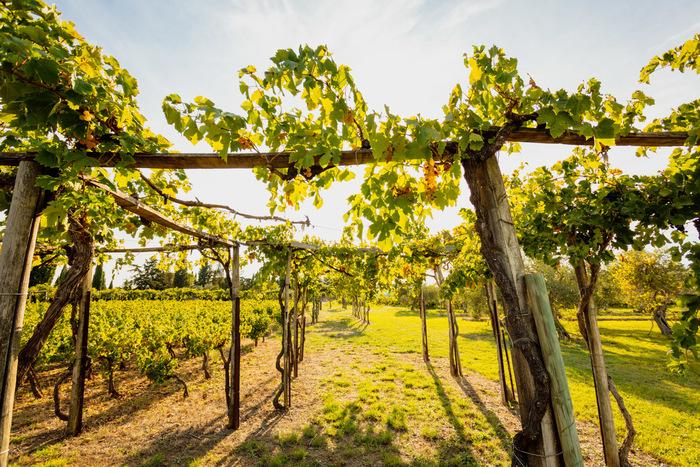 Journées du patrimoine 2020 - Circuit dans un jardin et un vignoble romains reconstitués