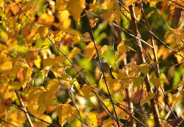 Zoom sur les feuilles