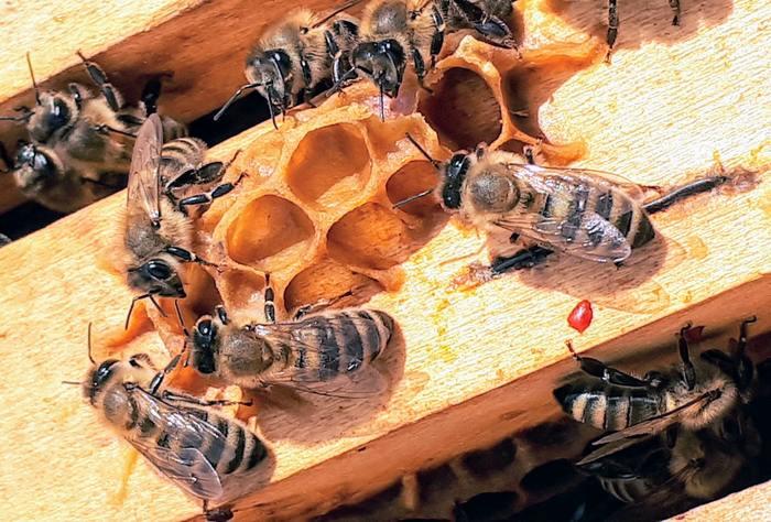 Journées du patrimoine 2020 - Démonstration : visite du rucher