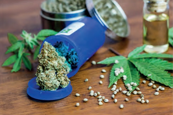 [Conférence] Utilisation du cannabis et pathologie du système nerveux
