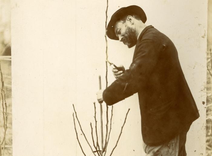 Journées du patrimoine 2020 - Visite guidée de l'exposition — Jean-Joseph Picoré, grand maître de l'arboriculture en Lorraine