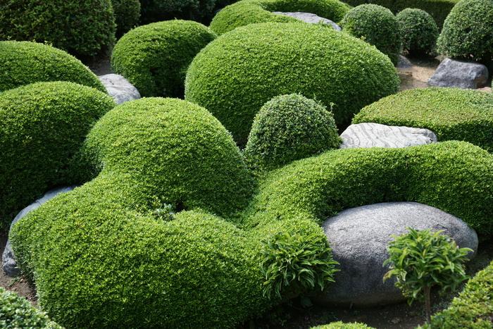 Journées du patrimoine 2019 - Présentation et dédicaces de l'ouvrage de Claude Lefèvre sur les jardins japonais