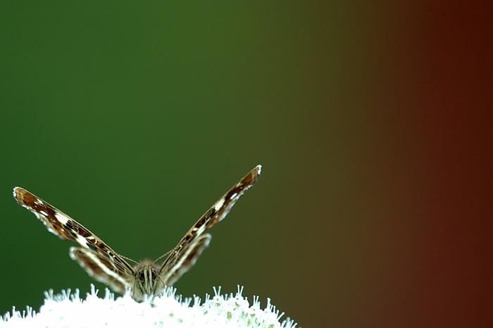 COMPLET Insectes et plantes : un lien pour la vie