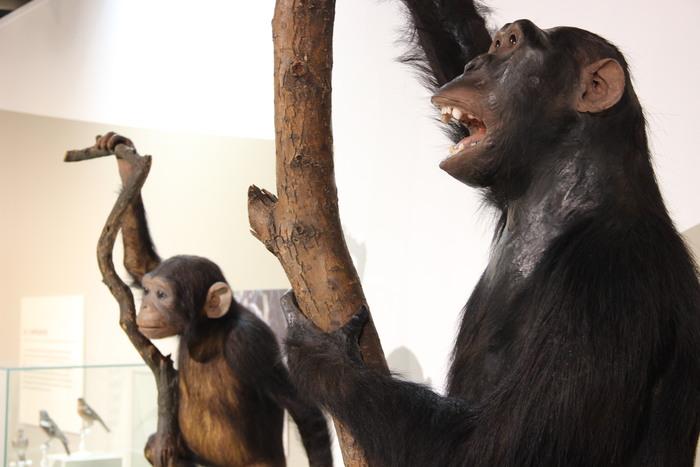 Fête de la science : Les animaux et nous !