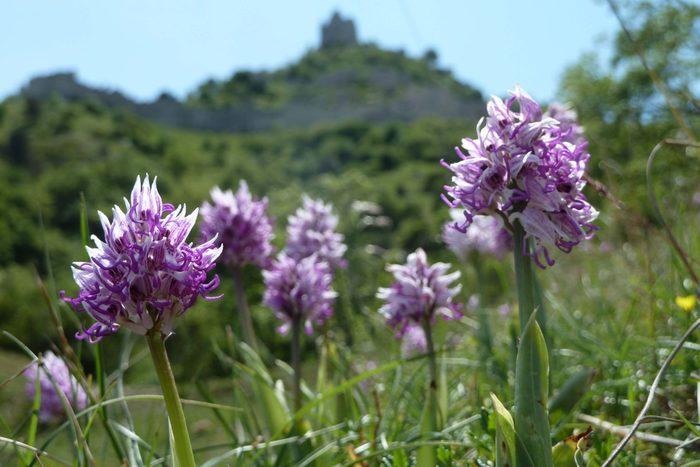 Découverte des orchidées de Crussol