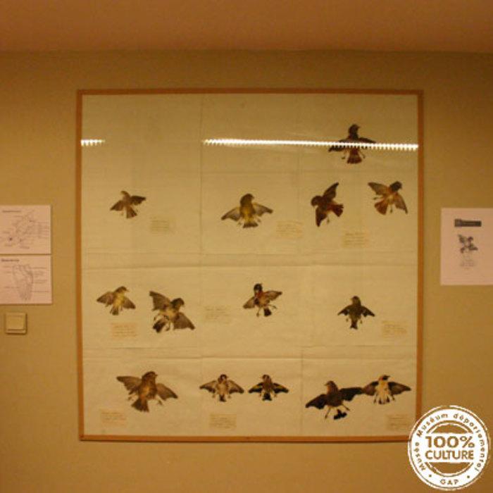 Journées du patrimoine 2020 - Rencontre et échange autour de L'herbier d'oiseaux