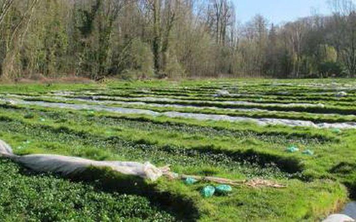 Journées du patrimoine 2020 - Exposition - La cressiculture et l'apiculture à Vayres-sur-Essonne