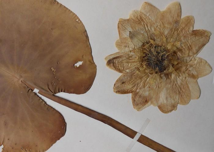 Journées du patrimoine 2020 - « Courbes Florales 1900 »