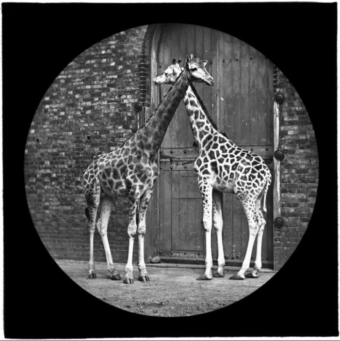 Journées du patrimoine 2019 - Images Naturelles - Visite guidée de la Cinémathèque et de ses collections