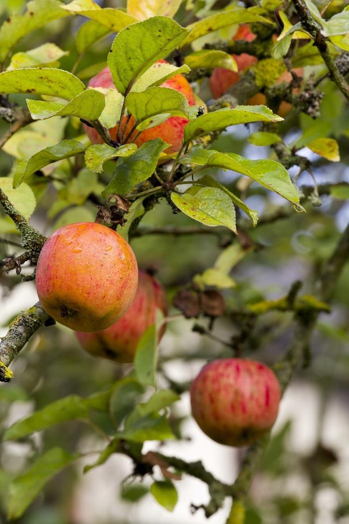 Journées du patrimoine 2020 - Atelier de fabrication de jus de pomme