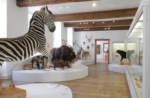 Nuit des musées 2019 -Collections du Musée Saint-Loup : archéologie, sculpture médievale, histoire naturelle, beaux-arts