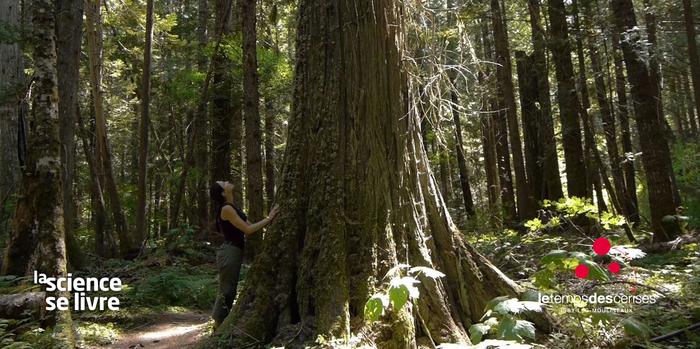 Projection : L'intelligence des arbres