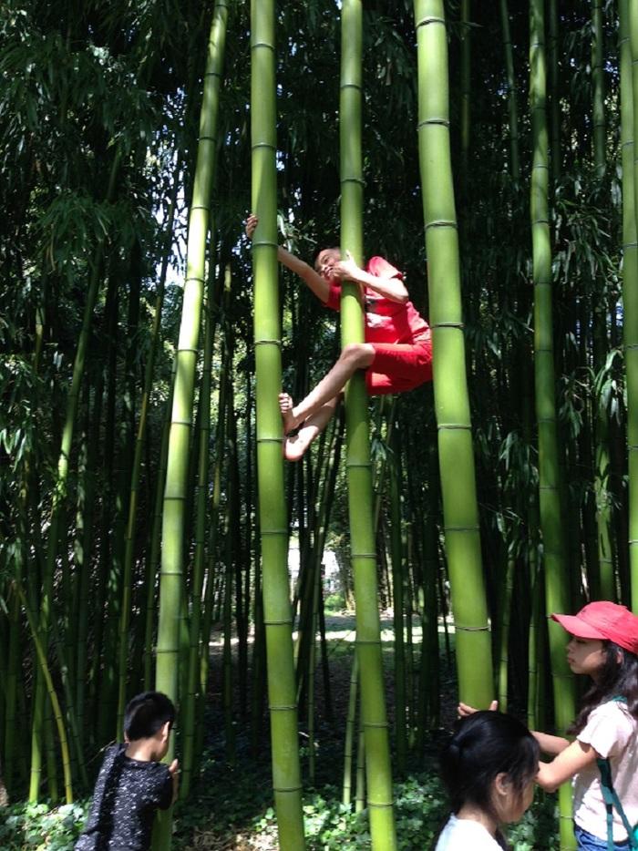 Journées du patrimoine 2020 - Découverte de la bambouseraie et de sa maison familiale du XVIIe siècle