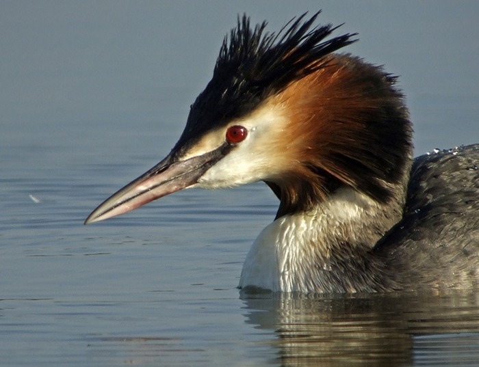 Balade matinale à la découverte des oiseaux COMPLET