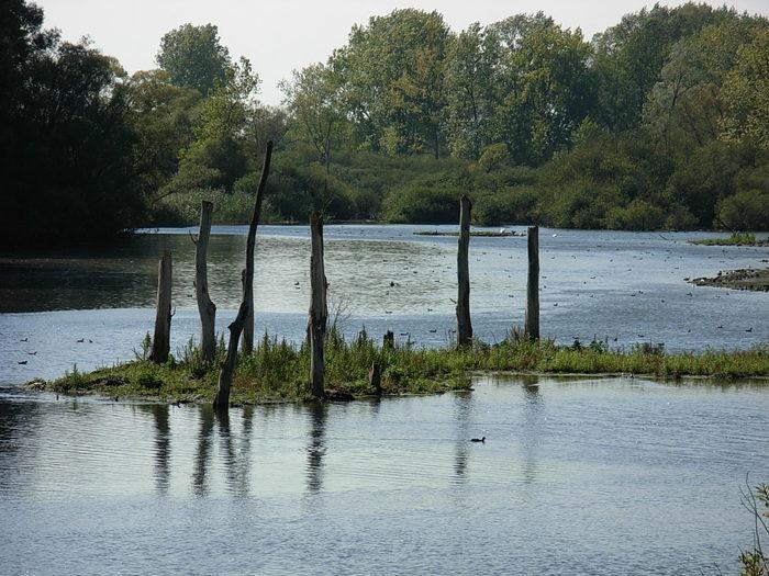 Balade naturaliste : eau secours !
